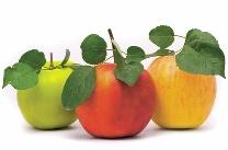 sadje_jabolka
